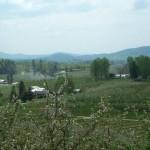 Spring Time at Coston Farm