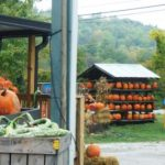 Pumpkins at Apple House