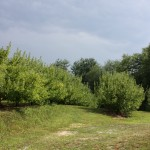 Pick ur own orchard 2 8.2011
