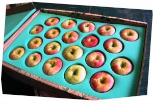 20 apple shipping (2)