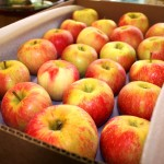 apples shipping (2)