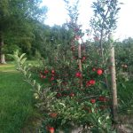 apple house 2014 003