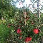 apple house 2014 004